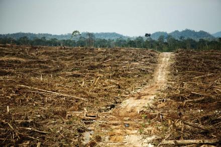 Foto: David Gilbert/Rainforest Action Network